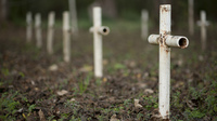 White metal crosses mark graves at the cemetery of the former Arthur Dozier School for Boys in Marianna, Fla. However, investigators in Florida using ground-penetrating radar and soil samples say there are nearly 100 unmarked graves on the grounds.