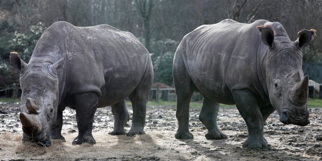 poaching of animals essays Write about the following topic: more and more wild animals are on the verge of extinction and others are on the endangered list what are the reasons for this what can be done to solve this problem.