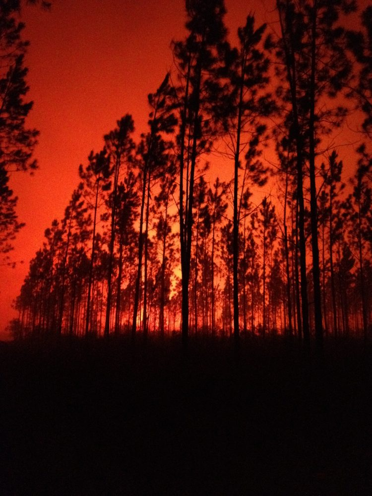 Osceola National Forest Firefighter Byron Hart captured this night scene on the County Line Fire on Saturday night.  Often strategic burns are done during the evening hours when fire behavior is more predictable.