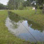Ditches in Micanopy area are filled with water.