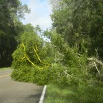 Tree fell on CR 346 near Micanopy