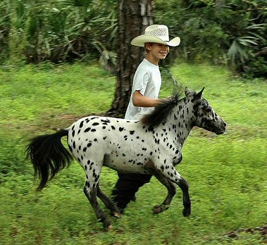 Miniature Horses Compete This Weekend At The Ocala