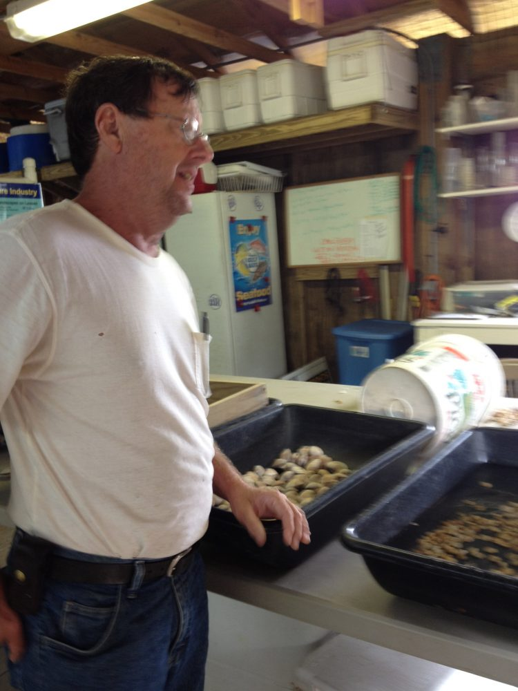 Clam research assistant at the Shellfish Aquaculture Research and Education Facility in Cedar Key, Reggie Markham.