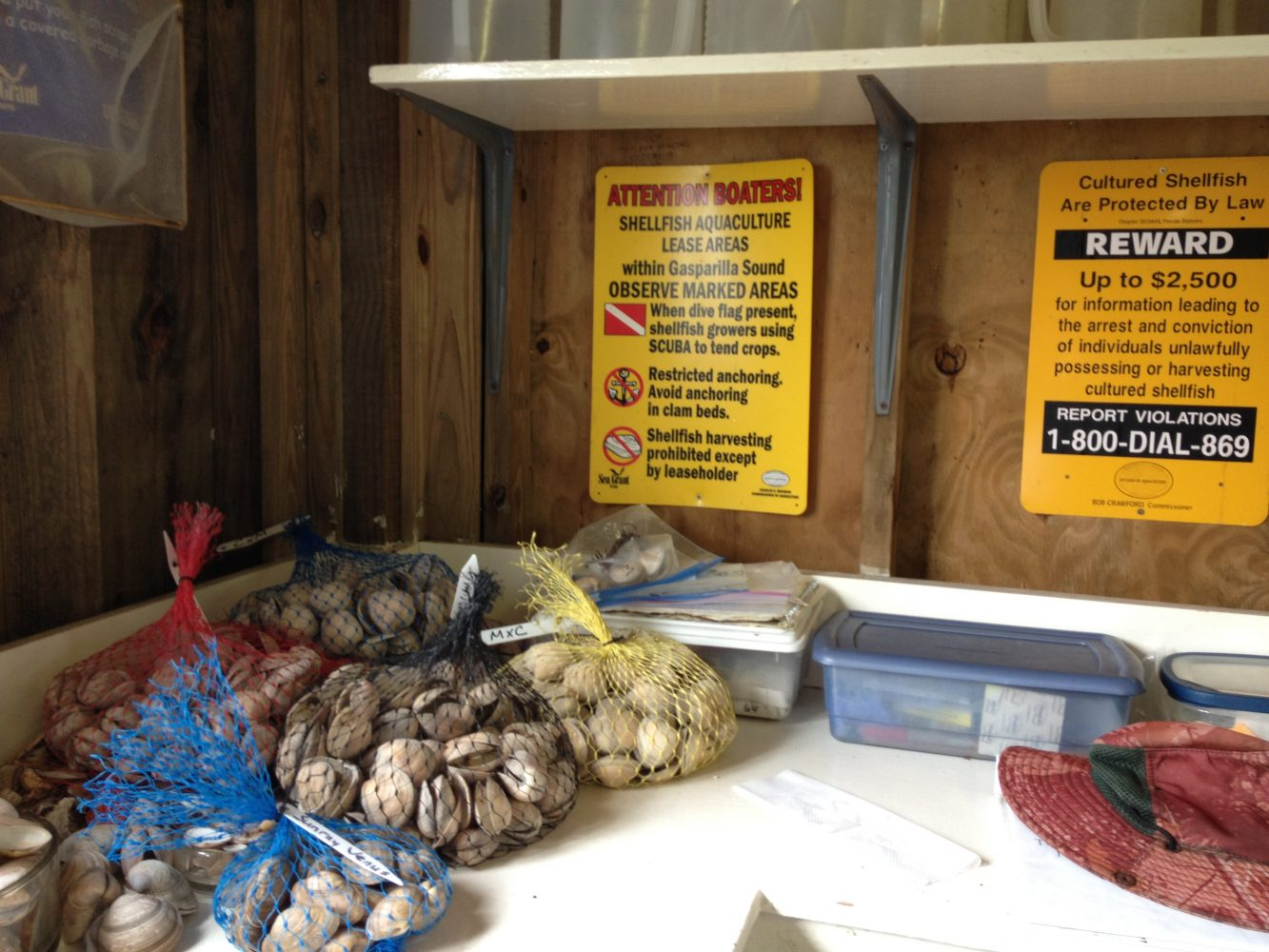 Bagged clams at Cedar Key research facility.