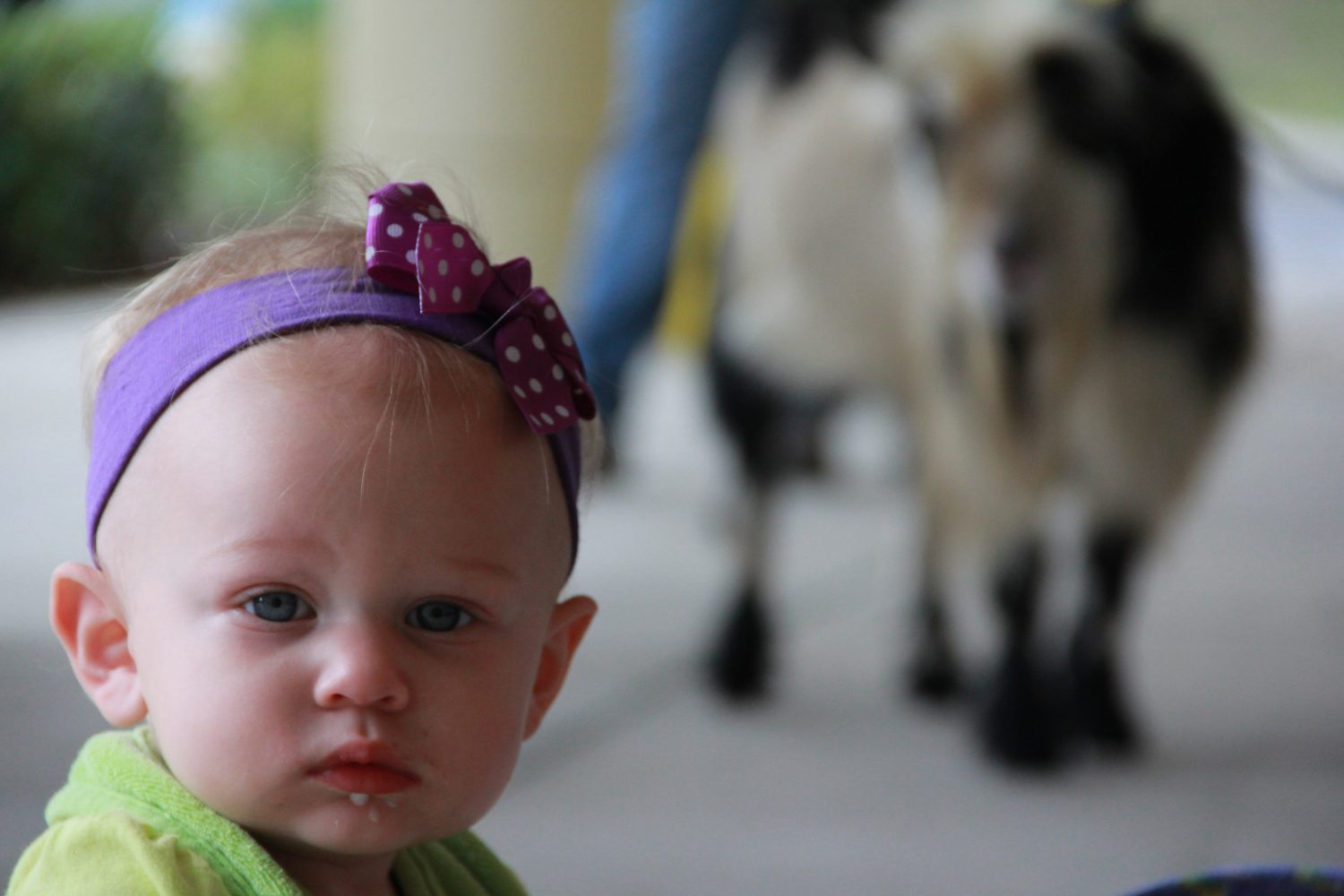 Haylee Jane attended the auction with her sister Kristin. Their mother, Emily, wasn't sure if she was going to buy Haylee Jane a goat or a pig for her first birthday.