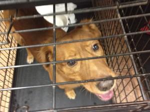 gainesville pet adoption