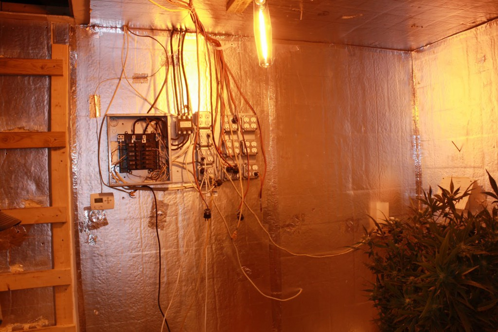 Officers seized 58 plants with a street value of $58,000 at a grow house in Bronson Tuesday.