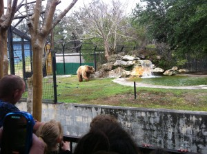 This bear at Silver Springs Nature Park will need to be relocated before the state begins to operate the park in October.