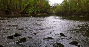 A tributary of the Suwannee River, which runs under Suspension Bridge at O'Leno.