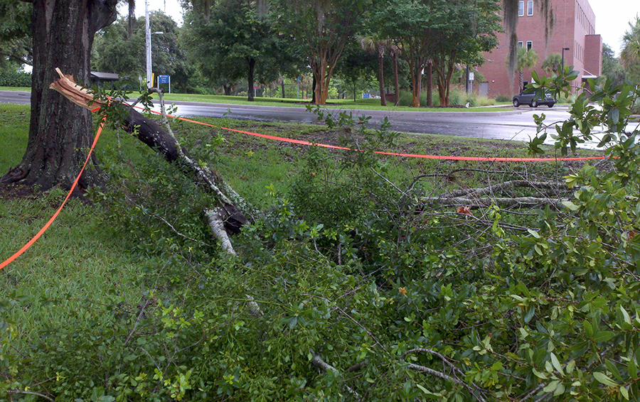 In Gainesville, there was minimal flooding and the biggest concern around the city was falling tree limbs, including this one that fell on the lawn across from the University of Florida Motor Pool.