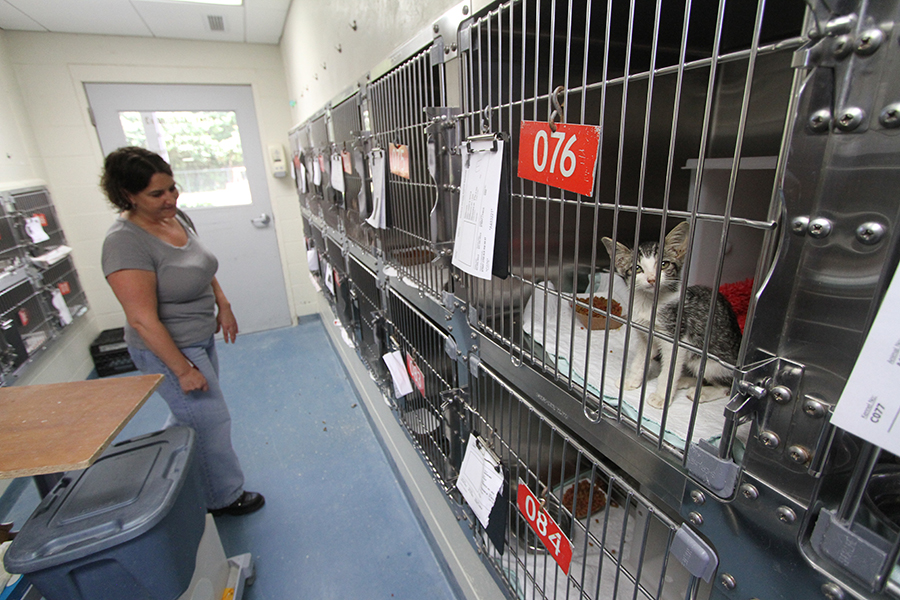 Tricia Kyzar, an Alachua County employee, checks in on cats who are ready for adoption at the county animal shelter on Thursday.