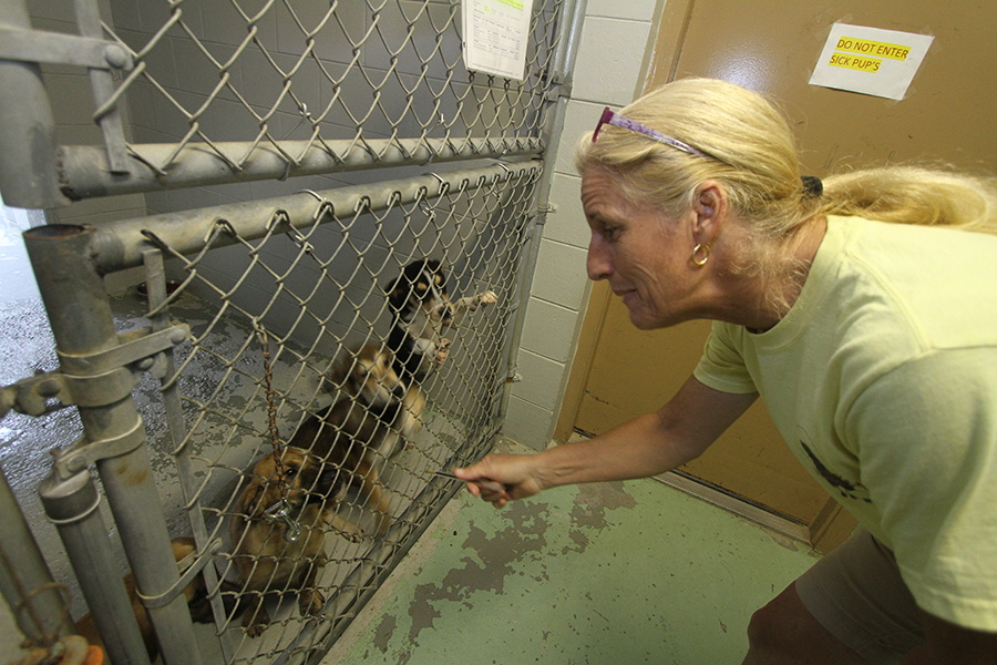 Teena Ruffo, operations manager at the Lake City Humane Shelter, which contracts with Columbia County to provide animal services, checks in on three dogs Thursday. Columbia County's shelter adoption rate increased 67 percent between 2010 and 2012.