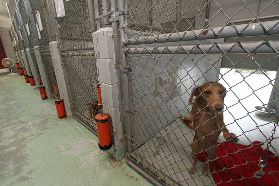 Millie, a dog at the Lake City Humane Society, awaits adoption Thursday in Columbia County.