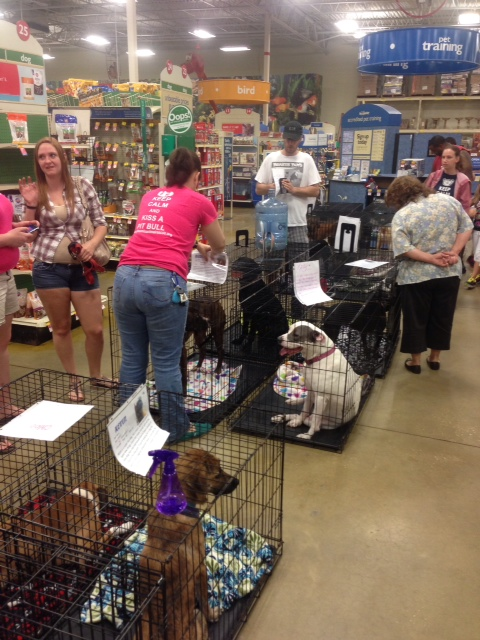 Foster parents bring their dogs to Petsmart every Saturday to get adopted.