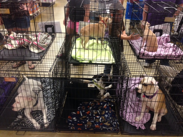 Every Saturday the Phoenix dogs are displayed at Petsmart for adoption.