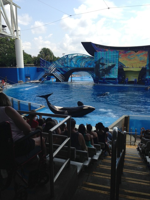 A killer whale jumps on the platform and spins around as the audience watches.