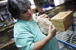 Kathy Finelli cradles Brown Sugar, a 1-and-a-half-year-old mini rex rabbit who was abused in her previous home and is currently up for adoption.