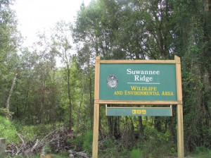 The Suwannee Ridge could see renovations to its trails and parking areas with Florida Fish and Wildlife Commission's 10-year management plan.