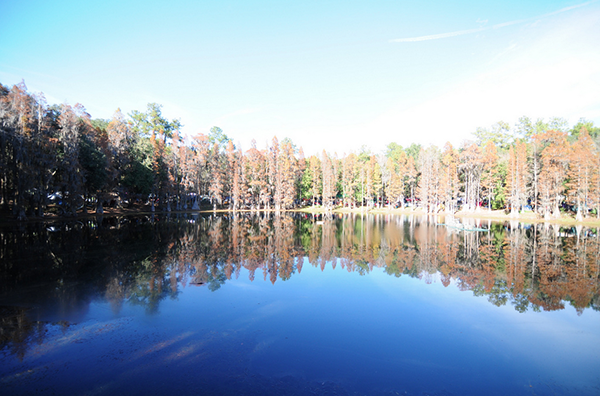 "The Spirit of the Suwannee Music Park lines the historic Suwannee River. The park will host the band String Cheese Incident and its ""Hulaween"" festival from Thursday through Saturday night."
