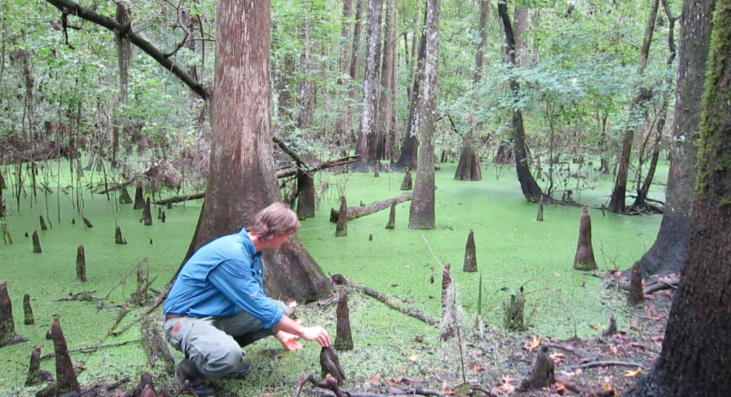 Kevin Ratkus, Alachua County's Environmental Protection Department's environmental specialist, inspects an area of the 23-acre plot of land that would be overlooked and maintained by a county-contracted caretaker.