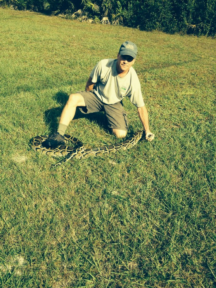 Wildlife biologist and trap inventor, John Humphrey poses with a python.