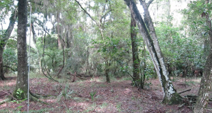 Alachua County will allow the caretaker hunting rights on the land in exchange for maintaining the land.