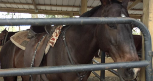 Florida Horse Park Ocala