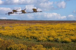 Attendance at Paynes Prairie Preserve State Park increased by more than 100,000 visitors in the 2012-2013 fiscal year.
