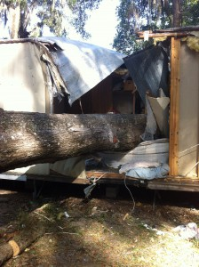 This 10 ton 4 foot wide oak tree crashed through the roof and directly onto a local couple in their Southwest Gainesville home. The woman in the bed was killed and her 40 year old husband was crushed under the tree, rescued by Alachua County Fire Rescue, and is currently in the hospital.