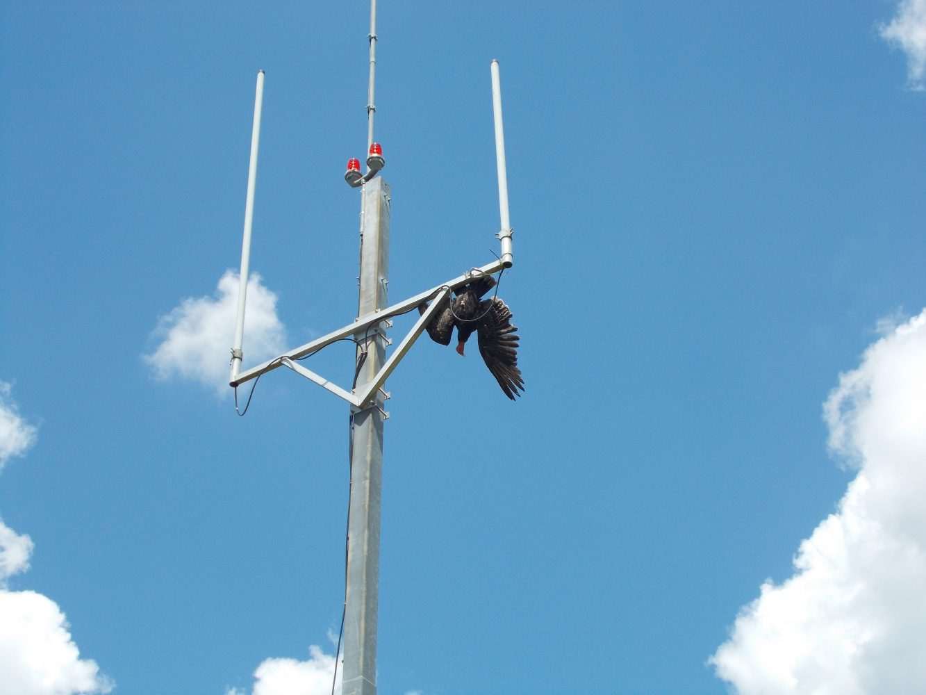 The effigy hung from an antenna at the Gainesville Regional Airport has been successful at keeping the birds off of it. The effigies cost $300 and last a year or more.