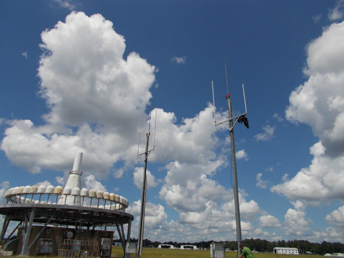 A vulture effigy is hung from an antenna at the Gainesville Regional Airport. The vultures like to perch on the antennas which damages them.