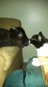 Goat Tea and Tux got along great together, Heather Cramer said. Cramer took in a goat Jan.9 and let it live on her couch until she was able to find a better home.