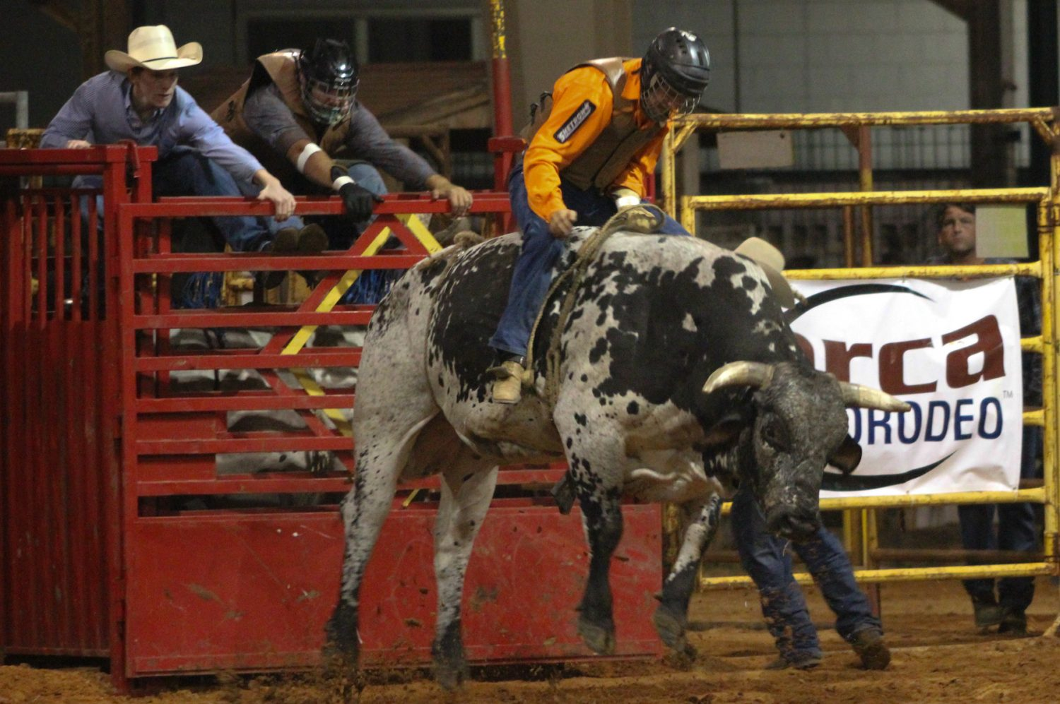 Clovis Crane of Lebanon, PA competes in the bull riding competition at the Ocala Pro Rodeo on Friday night, March 21, 2014.