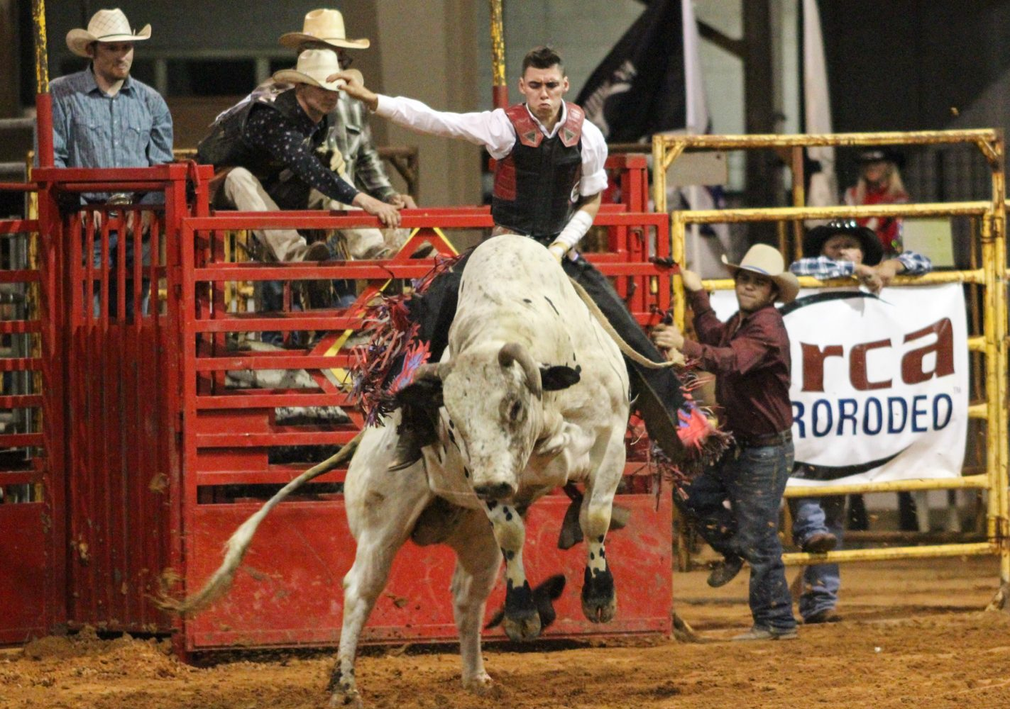 Hollywood Flores of Weirsdale, Fla. rides bull Banana Twist at the Ocala Pro Rodeo on Saturday night, March 22, 2014.