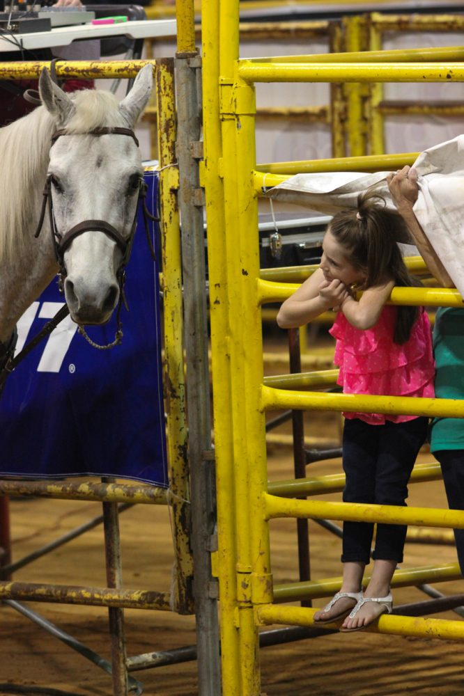 A young spectator pets a horse at the Ocala Pro Rodeo on Friday night, March 21. 2014.