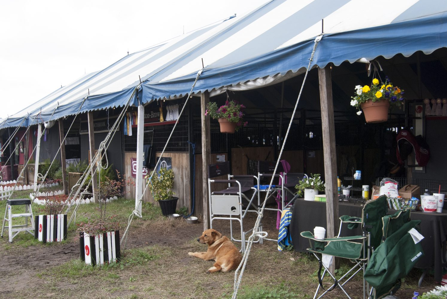 Whether it be locals or travelers from afar, HITS participants' set up temporary stables for the 10-week circuit as each barn claims its territory with signs, decorations and ribbons from past competitions.