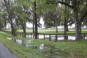 Much of the association's property remains submerged in water or muck which poses health concerns for the horses on the property. The association is prevented from running their horses out for adoption due to the wet conditions of their paddocks.