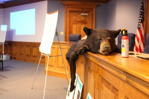 Florida Fish and Wildlife Conservation Commission members display props for their public meeting in the City of Gainesville's City Hall on March 25. The meeting went over what the public wanted the commission to do about bear problems and how to deal with human-bear interactions, including bear spray (seen right).