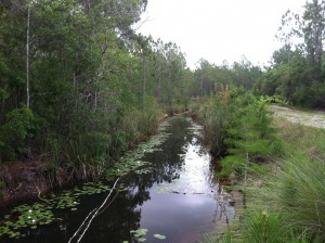 The Otter Sink Project works to reverse decades old drainage practices and canals in order to restore a more natural wetland environment.