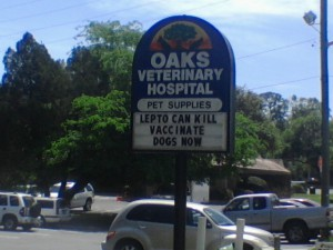 Oak Veterinary Hospital urges pet owners to vaccinate their dogs in light of recent leptospirosis cases.