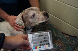 Molly taken into the care of Animal Services after being abused by Fleming.