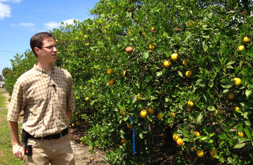 Dr. Evan Johnson, research scientist in plant pathology, explains the signs and symptoms of citrus greening, or HLB (huanglongbing),  at University of Florida's Citrus Research and Education Center in Lake Alfred, Florida.