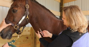Veterinarian Heather Case draws blood from a horse. Case is now legally able to take controlled substances outside of clinics to administer care to patients thanks to the Veterinary Medicine Mobility Act.