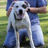Cassidy, an 18-month-old Lab/American Bulldog mix who was part of Academy 14 and his inmate trainer.