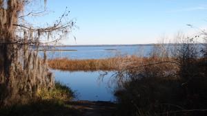 Newnans Lake, shown here near 7400 E. University Ave., in Gainesville, Fla.