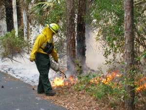 A Florida Forest Service wild land firefighter conducts a prescribed burn to reduce wildfire risks in the Okeechobee district.