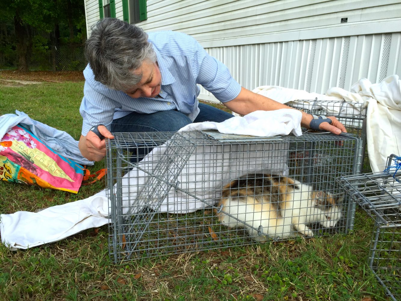 Operation Catnip Launches Website Educates On Trap And