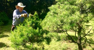 At his Unicorn Hill Christmas Tree Farm, John Gregory perfects the shape of his trees planted across five fields that surround his Gainesville home.
