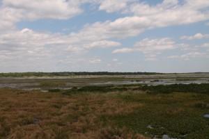 Payne's Prairie Preserve State Park, Alachua County, FL, Monday, August 31, 2015.