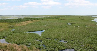 Paynes Prairie State Preserve in Alachua County, Florida.